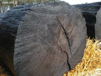 Ukraina. Czarny dab od 5 zl/szt, surowiec drewna kopalnego